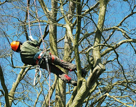 Surrey-garden-designer-tree-surgery-Cobham-tree-care