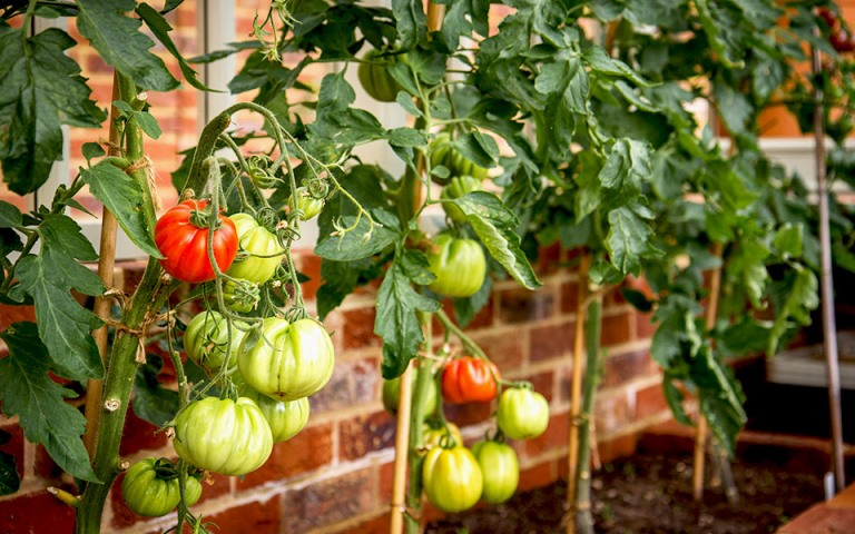 Garden-designers-surrey-veggies-Petersfield-Hampshire