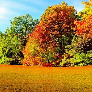 Surrey-garden designers-Autumn-tree-colour-October-trees