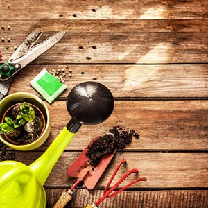 Surrey-garden-design-November-garden-maintenance