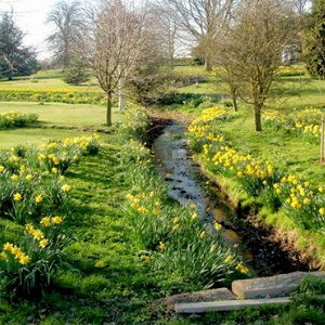 Surrey-garden-designers-March-Spring-gardening